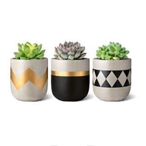 🌻NEW🌻 Modern Farmhouse Succulent Plant Pots